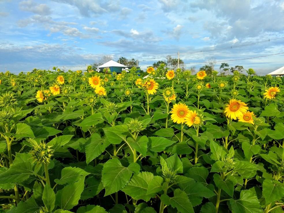 Resultado de imagem para Rondônia Rural Show em Ji-Paraná