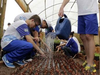 Aproximadamente cinco mil mudas serão entregues à população (Foto: Prefeitura de Toledo/ Divulgação)