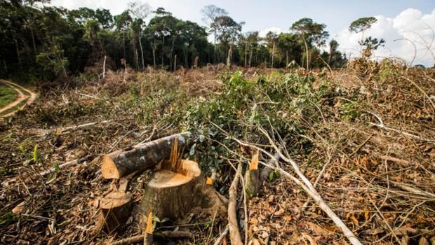 Desmatamento na Amazônia já cresceu 93% neste ano, aponta Inpe