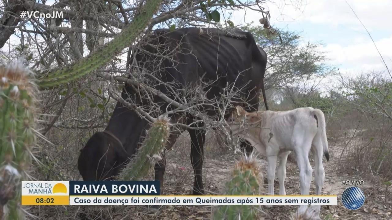 Após 15 anos, caso de raiva em bovino é registrado em cidade do interior da Bahia