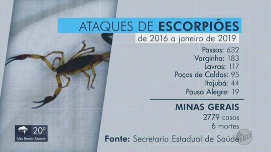 Passos é a cidade do Sul de Minas com mais ataques de escorpião; veja ranking