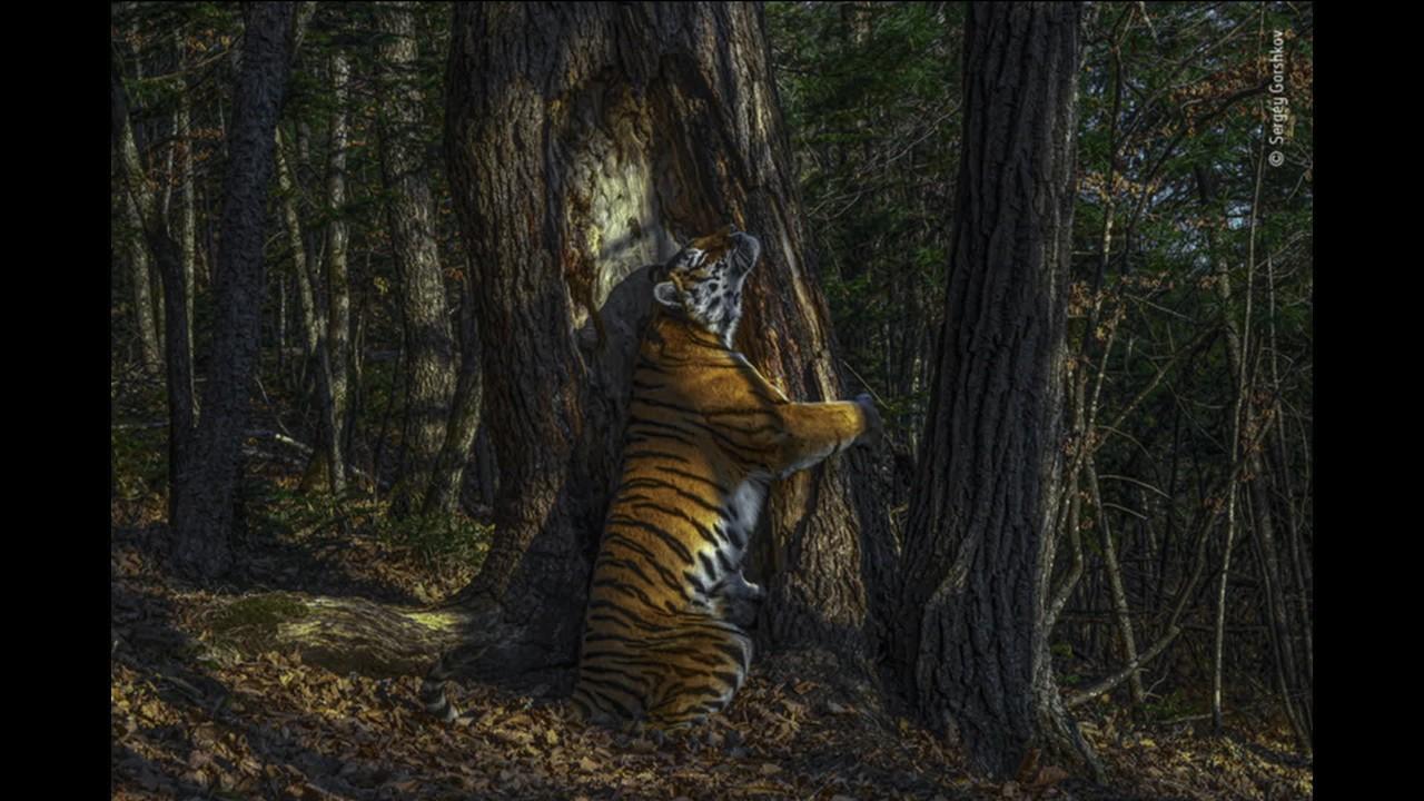 Conheça as fotos vencedoras do Prêmio de Fotografia Selvagem