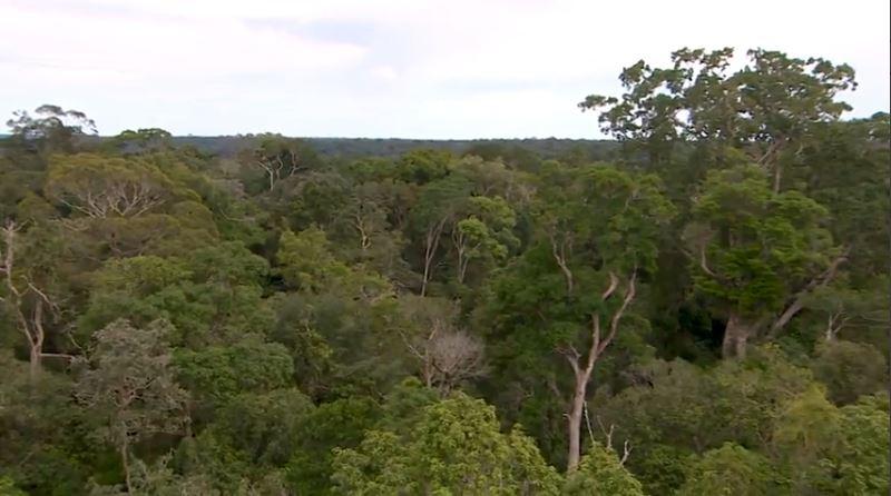 Fundo de R$ 250 milhões financiará projetos de conservação da floresta na região amazônica