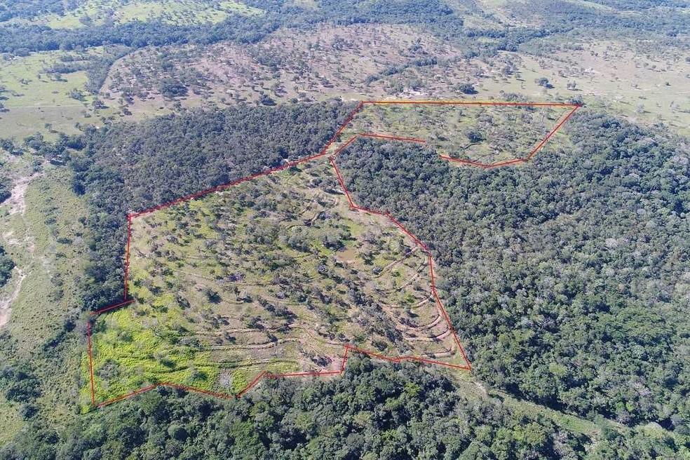 Em imagem de arquivo de 2018, círculo em vermelho mostra a área desmatada já com pastagem — Foto: PMA/Divulgação