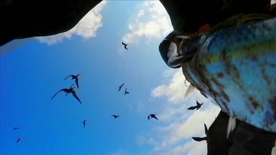 'Peixe espião' flagra fragatas atacando barco que acaba de voltar de pescaria