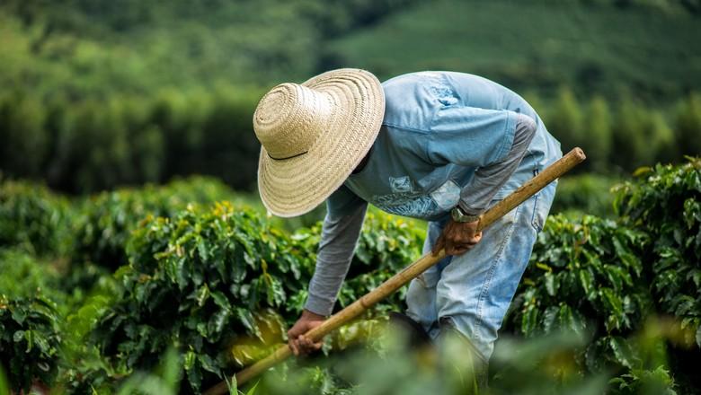 café-nespresso-fazenda-cafezal (Foto: Divulgação/Nespresso)