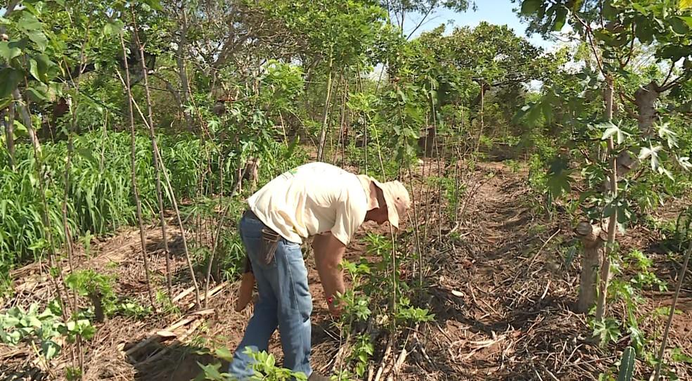 Agricultor agroflorestal transforma área degradada no Sertão de Pernambuco em reserva ecológica — Foto: Reprodução/ TV Grande Rio