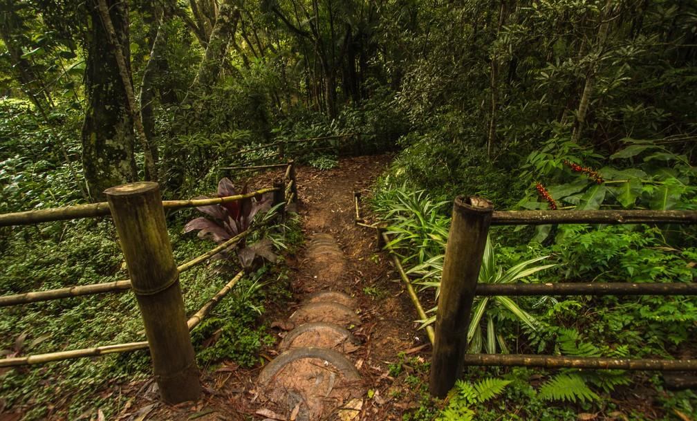 Área verde no Parque Natural Municipal do Itaim, na Zona Sul de SP — Foto: Joca Duarte/Secretaria do Verde e do Meio Ambiente