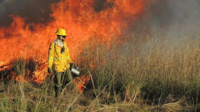 Combate a incêndio florestal (Foto: Arquivo pessoal)