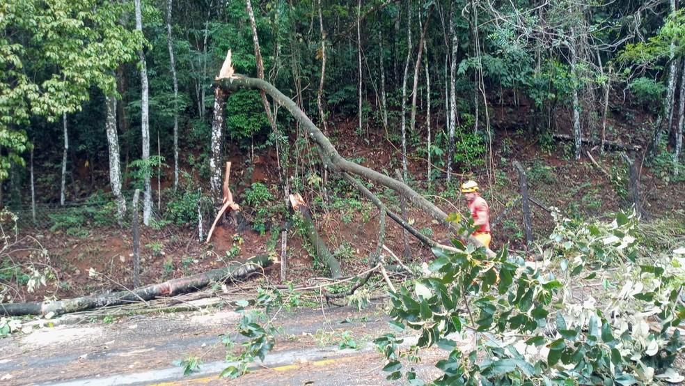 Queda de árvore é registrada em avenida de Juiz de Fora — Foto: Corpo de Bombeiros/Divulgação