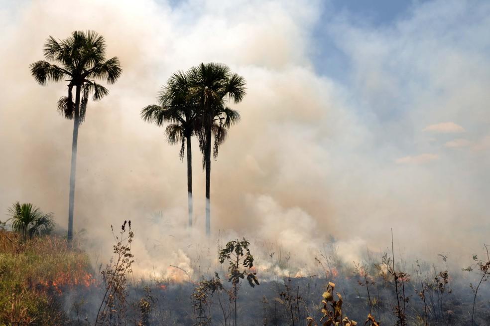 Vegetação queimando em área do DF. (Foto: Gabriel Jabus/Agência Brasília)