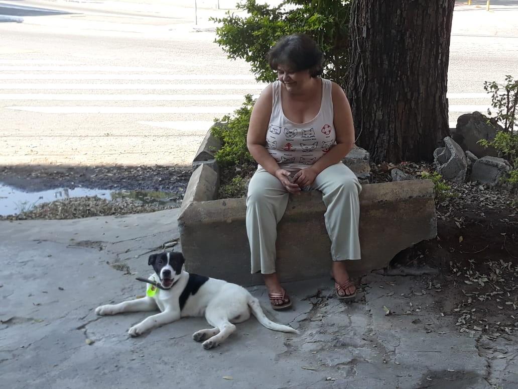 Cachorro 'corintiano' adotado após ser resgatado de córrego na Zona Norte de SP faz sucesso na internet