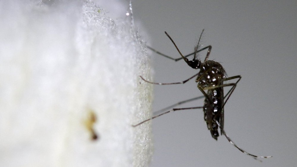 SC tem primeiros 2 casos de dengue contraídos dentro do estado em 2018