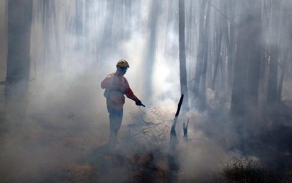 Bombeiro combate incêndio em área florestal; em imagem de arquivo — Foto: Corpo de Bombeiros/Divulgação