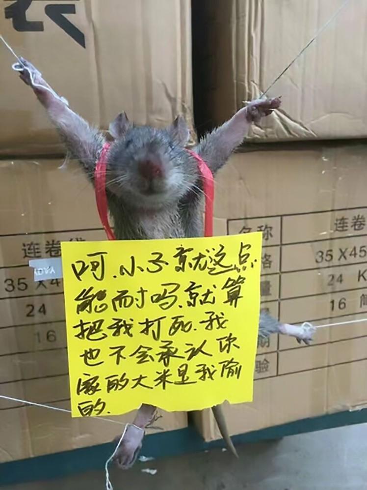 Rato punido por 'roubar' alimento
