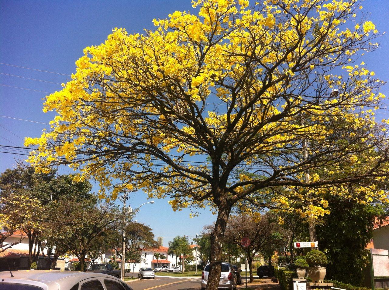Dia da Árvore é celebrado em Juiz de Fora; confira a programação - Notícias - Plantão Diário