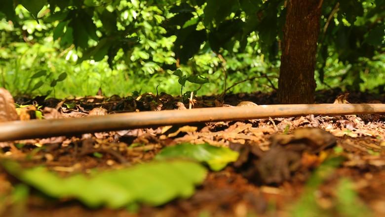 agricultura-cafe-irrigacao-netafim (Foto: Divulgação/Netafim)