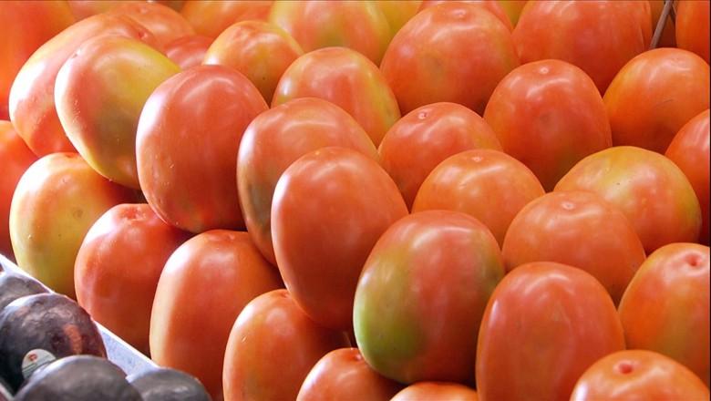 tomate-tv-agrotóxico-cultivo (Foto: Reprodução/ TV Globo)