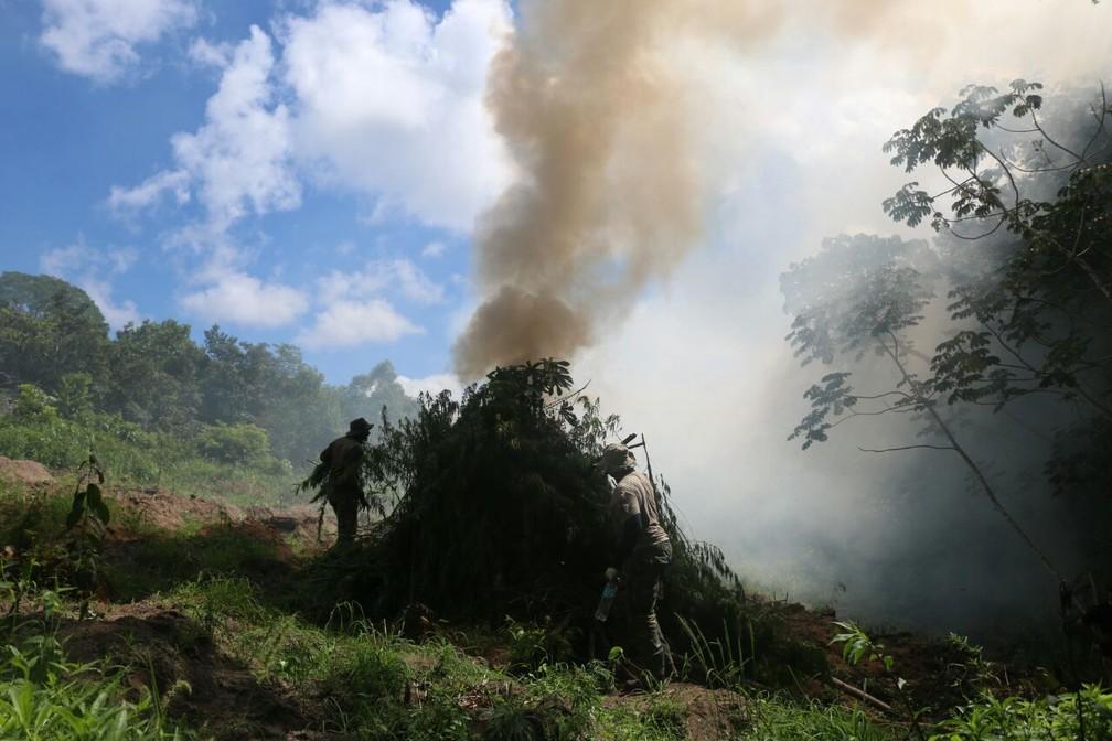 Cerca de 1,5 tonelada de maconha é destruída em Esplanada, na Bahia (Foto: Alberto Maraux / SSP-BA)