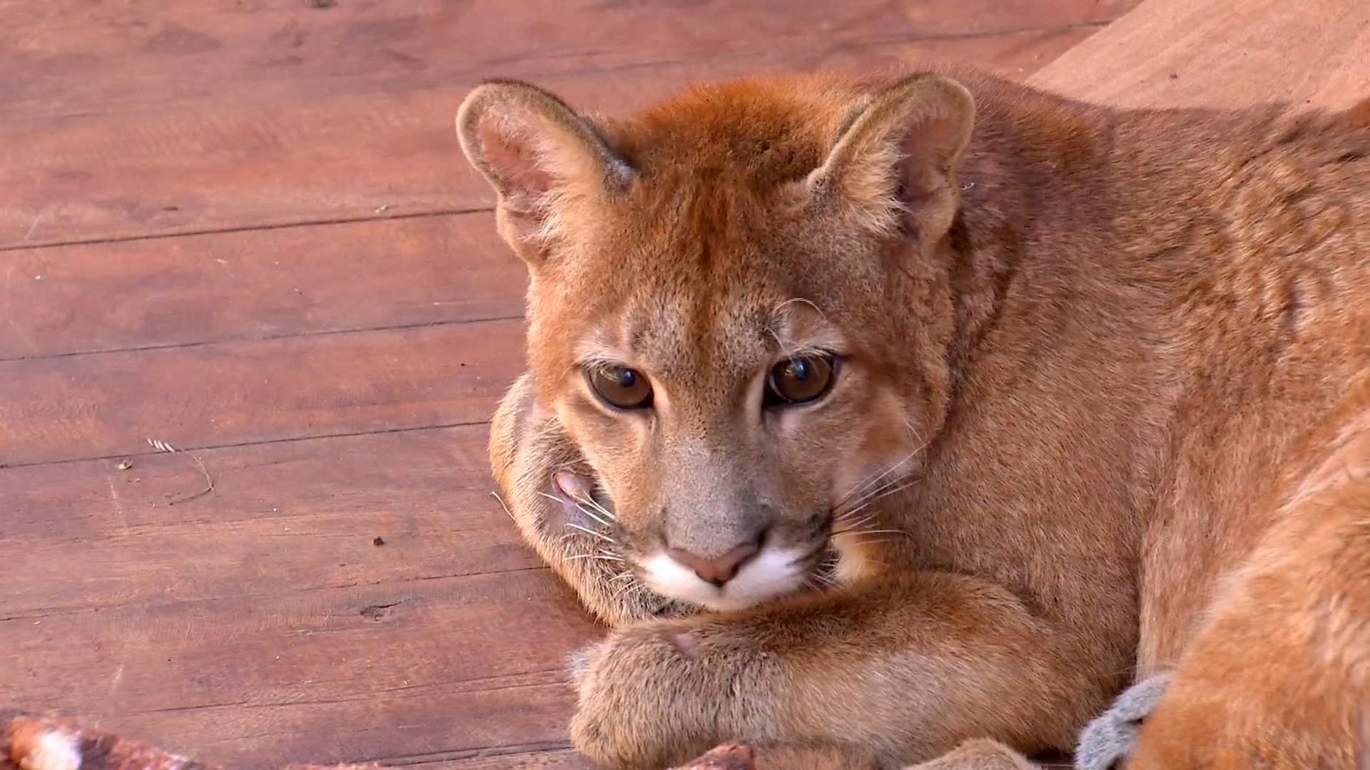 Número de animais silvestres socorridos aumenta em época de queimadas