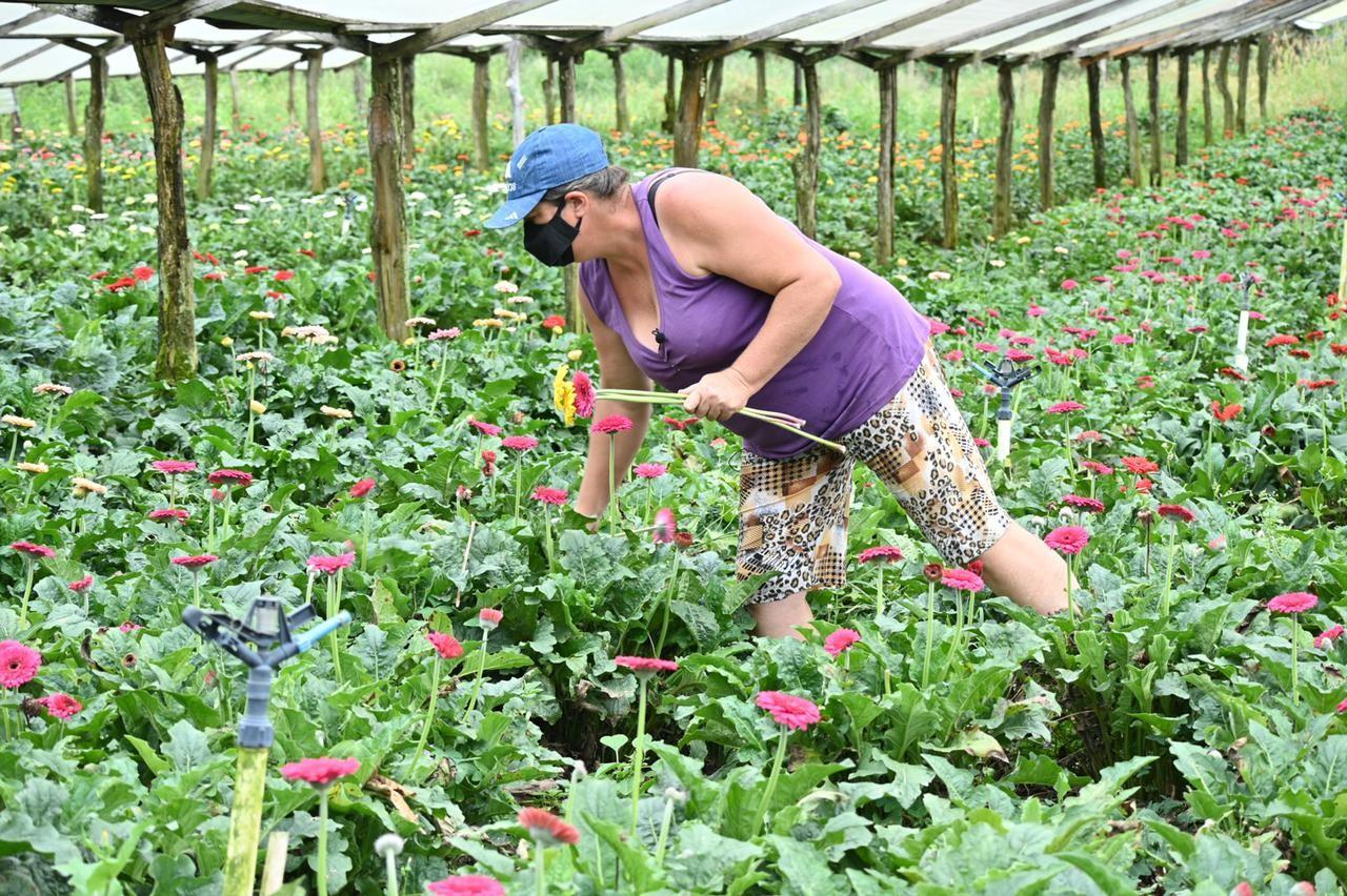 Mulheres se destacam no agronegócio no estado do Rio de Janeiro