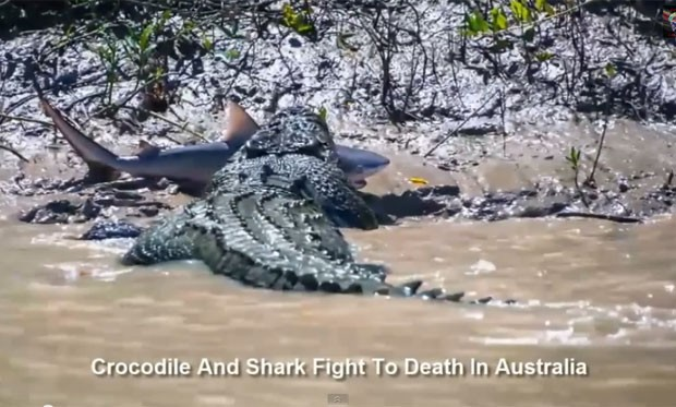 Crocodilo de mais de cinco metros oi flagrado na terça-feira (5) devorando um tubarão-touro no rio Adelaide (Foto: Reprodução/YouTube/InterestingLatestNews)