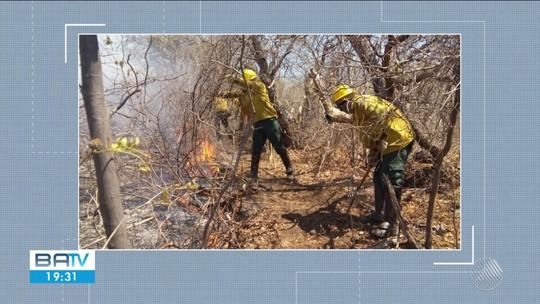 Após 15 dias, incêndio em área de preservação deixa 3 mil hectares destruídos e animais mortos