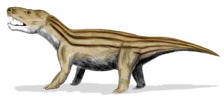 Representação artística de Cynognathus - Cinodontia (Foto: Nobu Tamura/Wikimedia Commons)