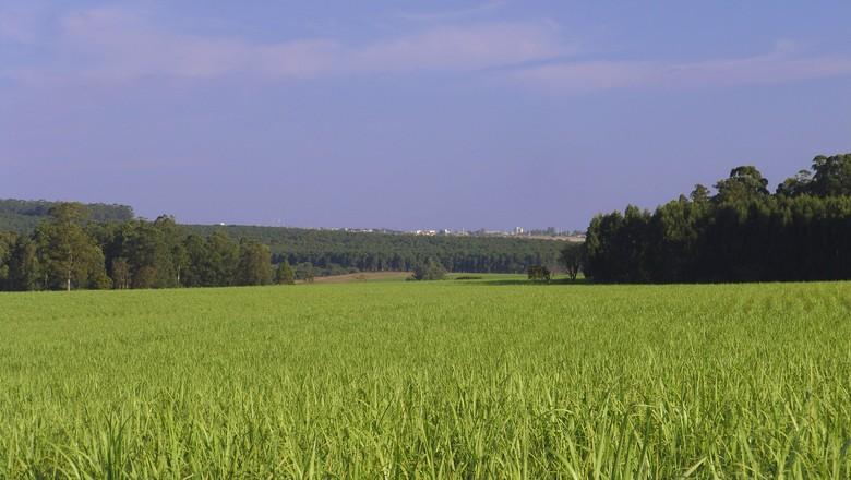 código-florestal-revogação-decreto-propriedades-rurais (Foto: Creative Commons)