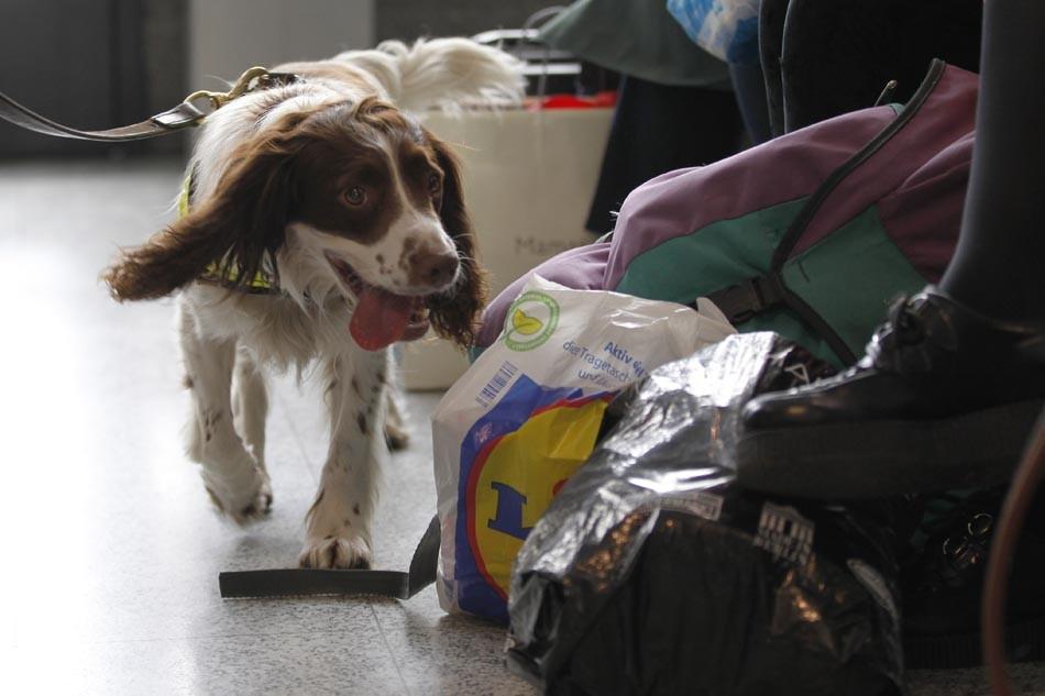 O mecanismo que pode fazer cães detectarem Covid-19