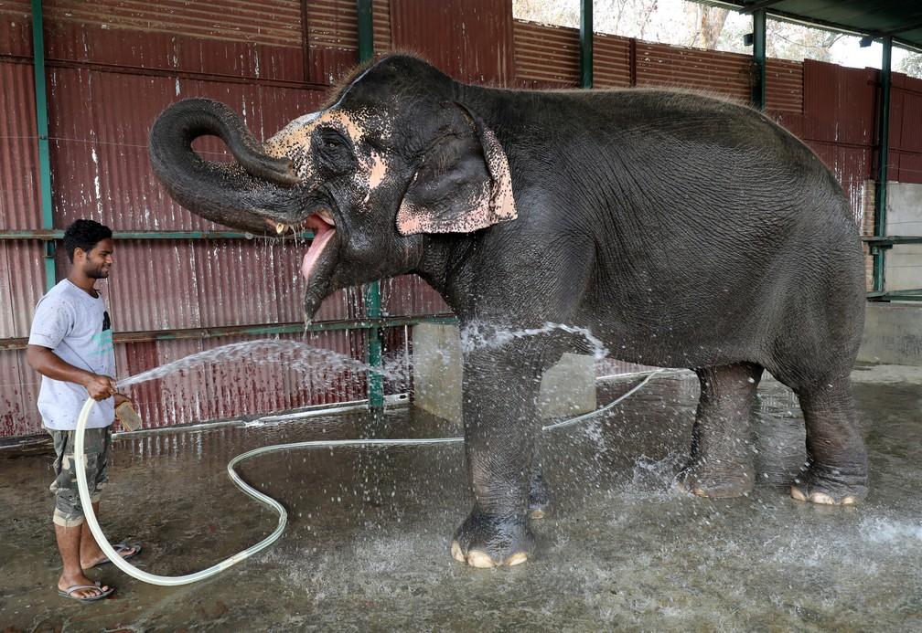 Elefante é banhado em hospital veterinário na Índia — Foto: REUTERS/Anushree Fadnavis