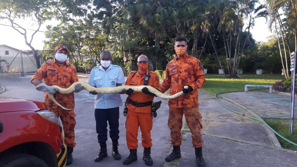 Cobra píton de 3 metros é resgatada do telhado de uma casa no Bairro Jangurussu, em Fortaleza