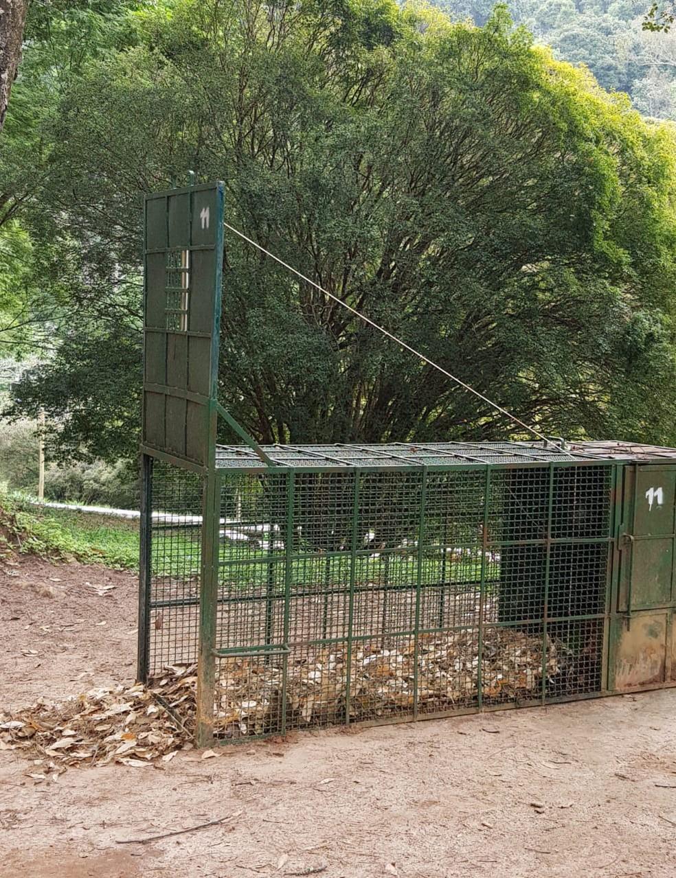 Quatro armadilhas de caixa foram instaladas na área interna e externa ao Jardim Botânico  — Foto: UFJF/Divulgação