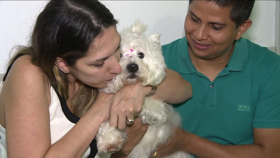 Cadela que foi roubada faz festa ao reencontrar donos em SP — Foto: Reprodução TV Globo