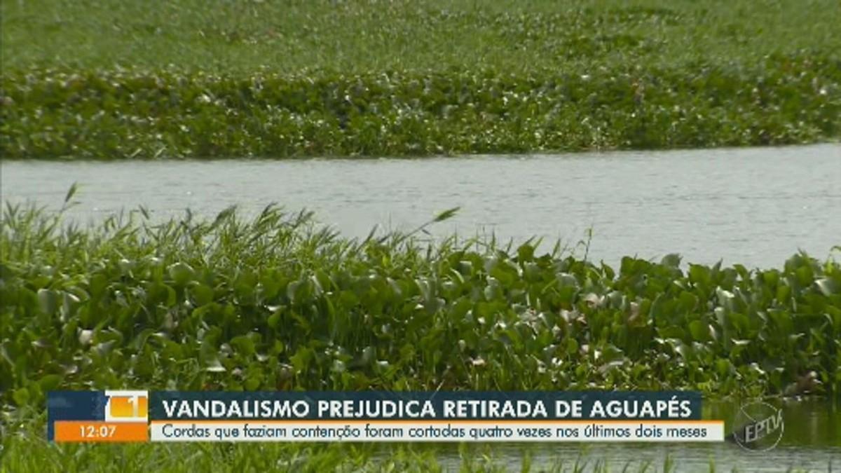 Barreiras para aguapés na represa do Salto Grande recebem cabos de aço após atos de vandalismo - G1