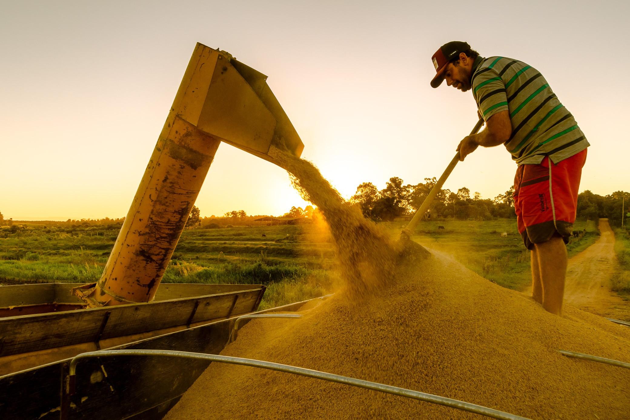 MST inicia captação de R$ 17,5 milhões no mercado financeiro para produção da agricultura familiar