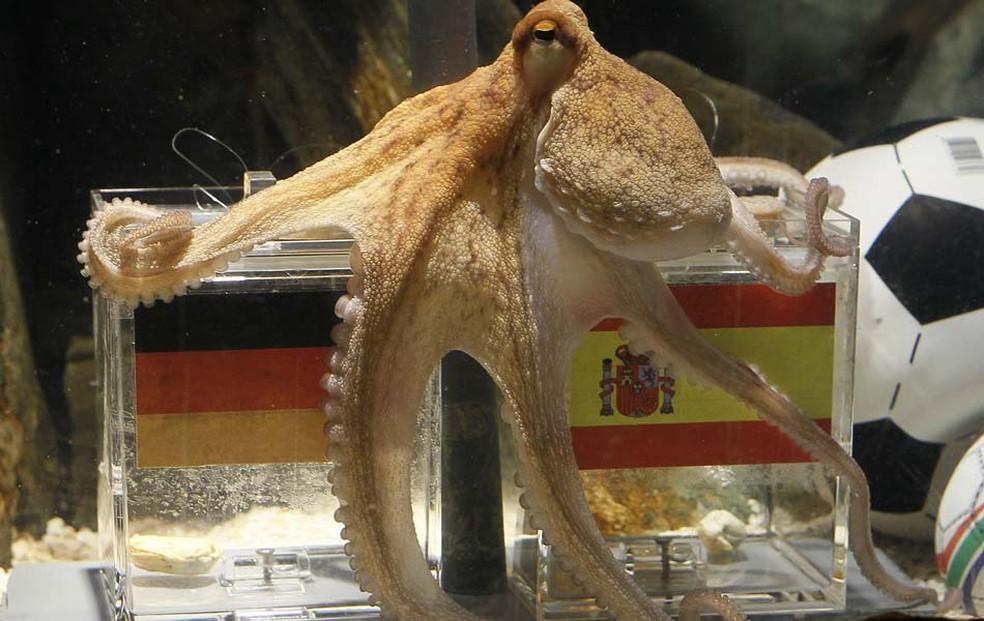 Polvo Paul durante previsão para a Copa de 2010, no aquário de Oberhausen, na Alemanha (Foto: Reuters)
