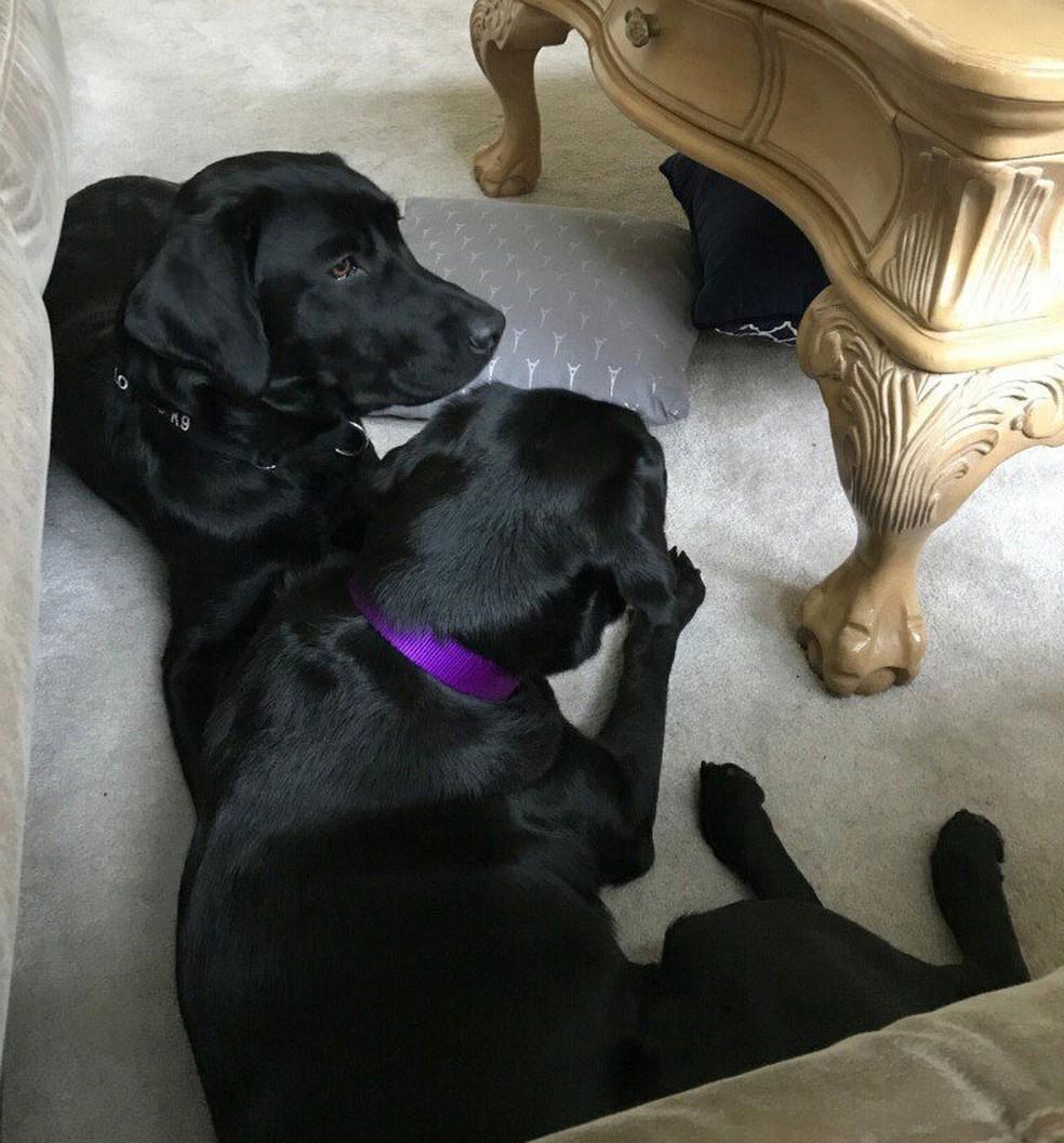Já em sua nova casa, Lulu tem a companhia do cão Harry (Foto: Reprodução/Twitter/CIA)