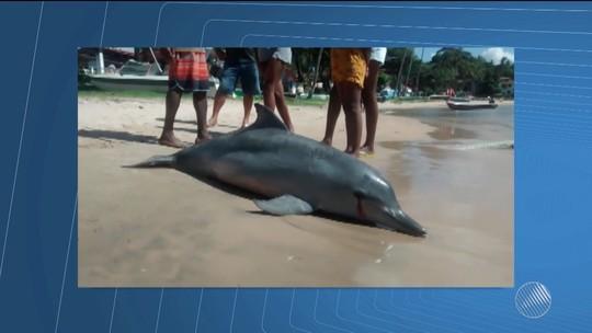 Golfinho é encontrado morto em praia turística na Bahia; suspeita é de que ele tenha se enroscado em rede