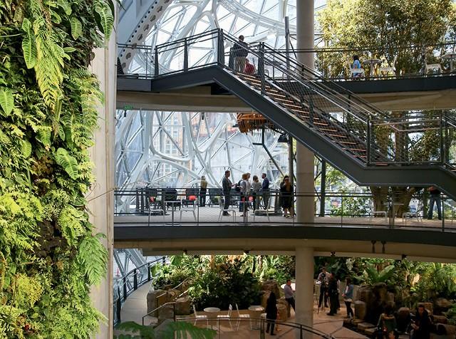 A Amazon deu início ao cultivo das plantas cinco anos antes da inauguração do The Spheres, em  2018 (Foto: Fotoarena)