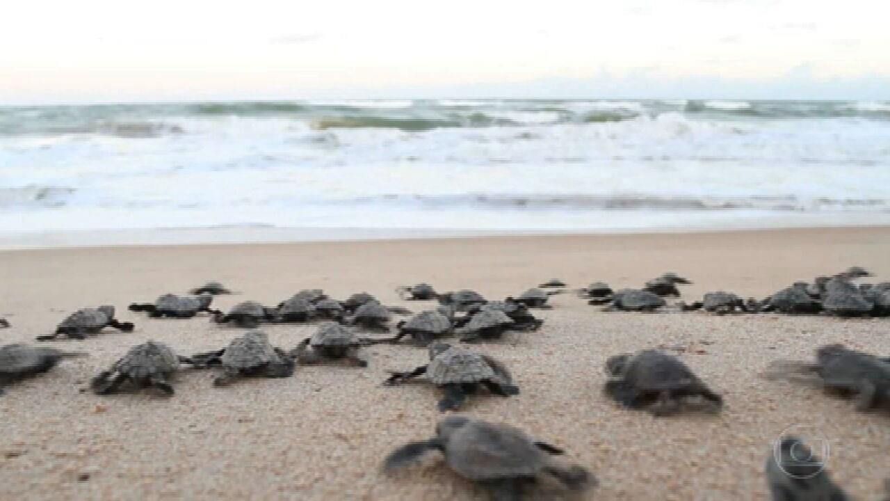Ventos protegem tartarugas em período de desova em Sergipe