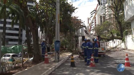 Árvore cai e deixa rua interditada no bairro de Ondina, em Salvador