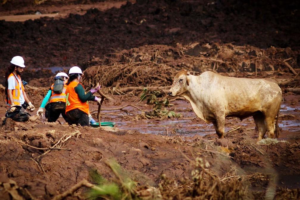Bombeiros, soldados do Exército e voluntários realizam trabalhos de resgate na região atingida pela lama em Brumadinho (MG) — Foto: Fernando Moreno/Estadão Conteúdo