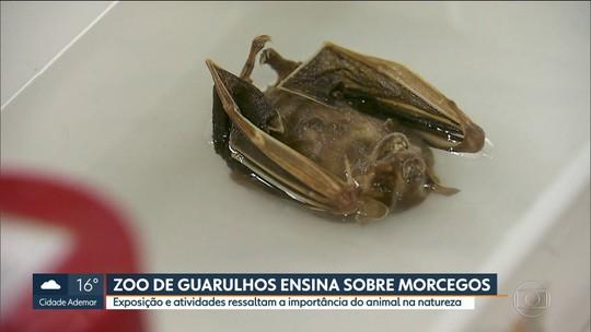 Zoológico de Guarulhos tem programação especial com morcegos