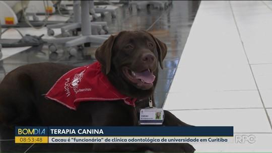 Presença de cachorrinha em consultório alivia o stress dos pacientes