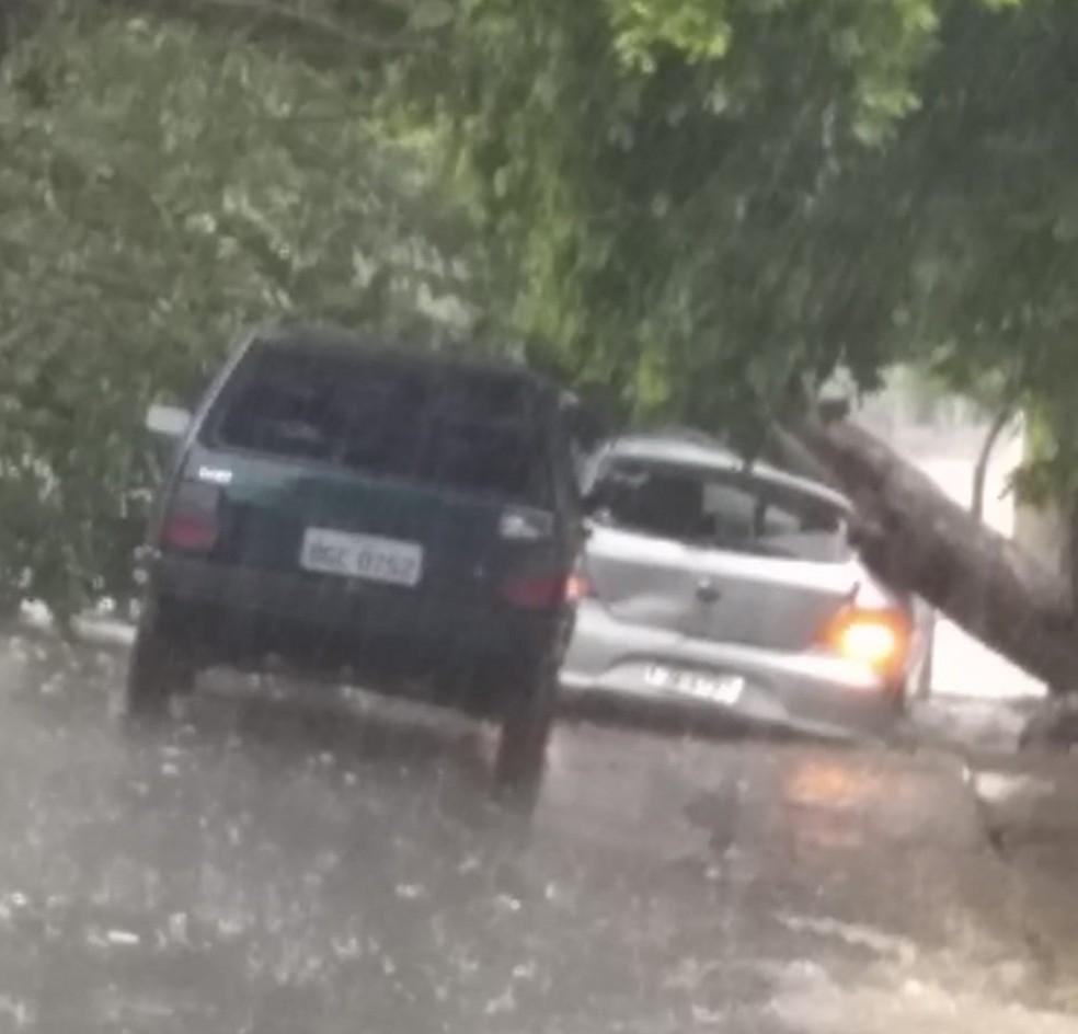 Árvore caiu em cima de carro estacionado em Birigui — Foto: Arquivo Pessoal