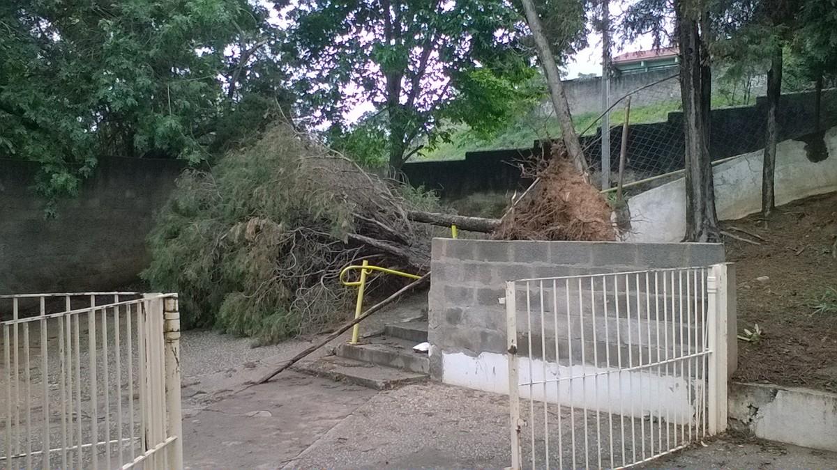 Árvore cai após chuva e bloqueia acesso de estudantes à escola em Votorantim