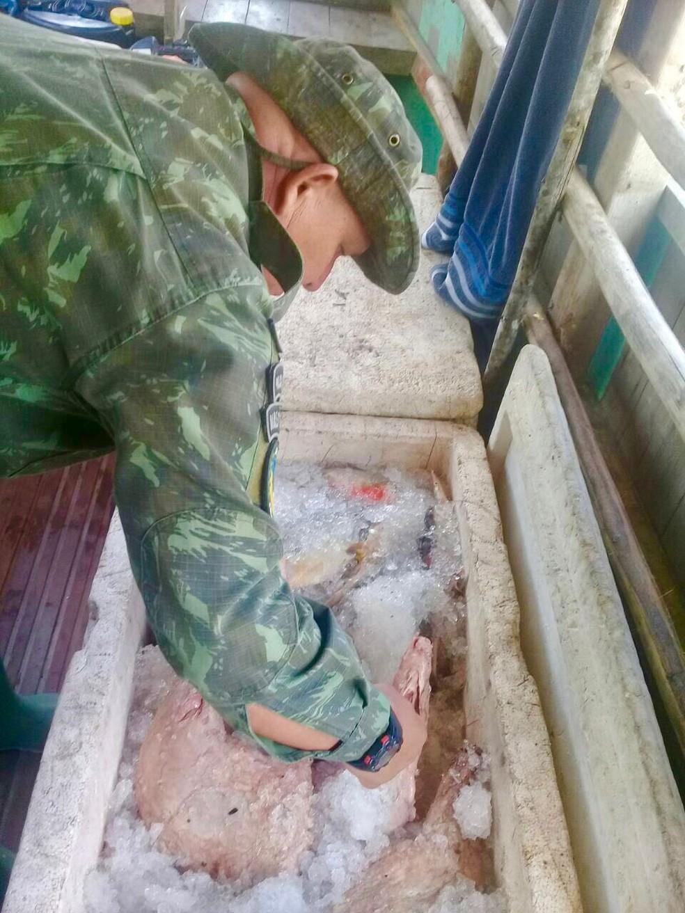 Polícia apreendeu ainda mais de 50 kg de carne de jacaré (Foto: Divulgação/Batalhão Ambiental)