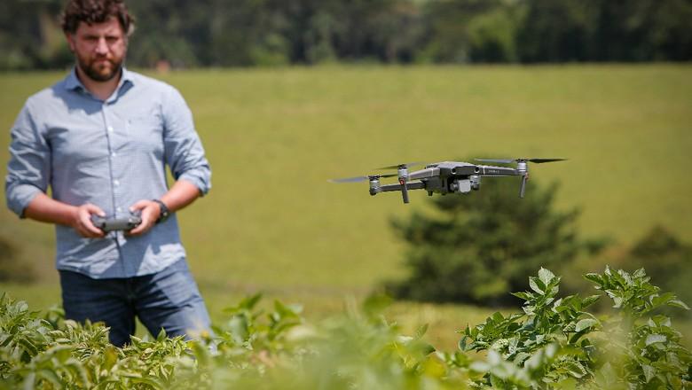 batata-parana-pepsico-drone (Foto: Jonathan Campos/Ed Globo)