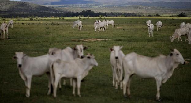 Brasil deve propor nova lei para rastrear fornecedor indireto de gado, diz ministra